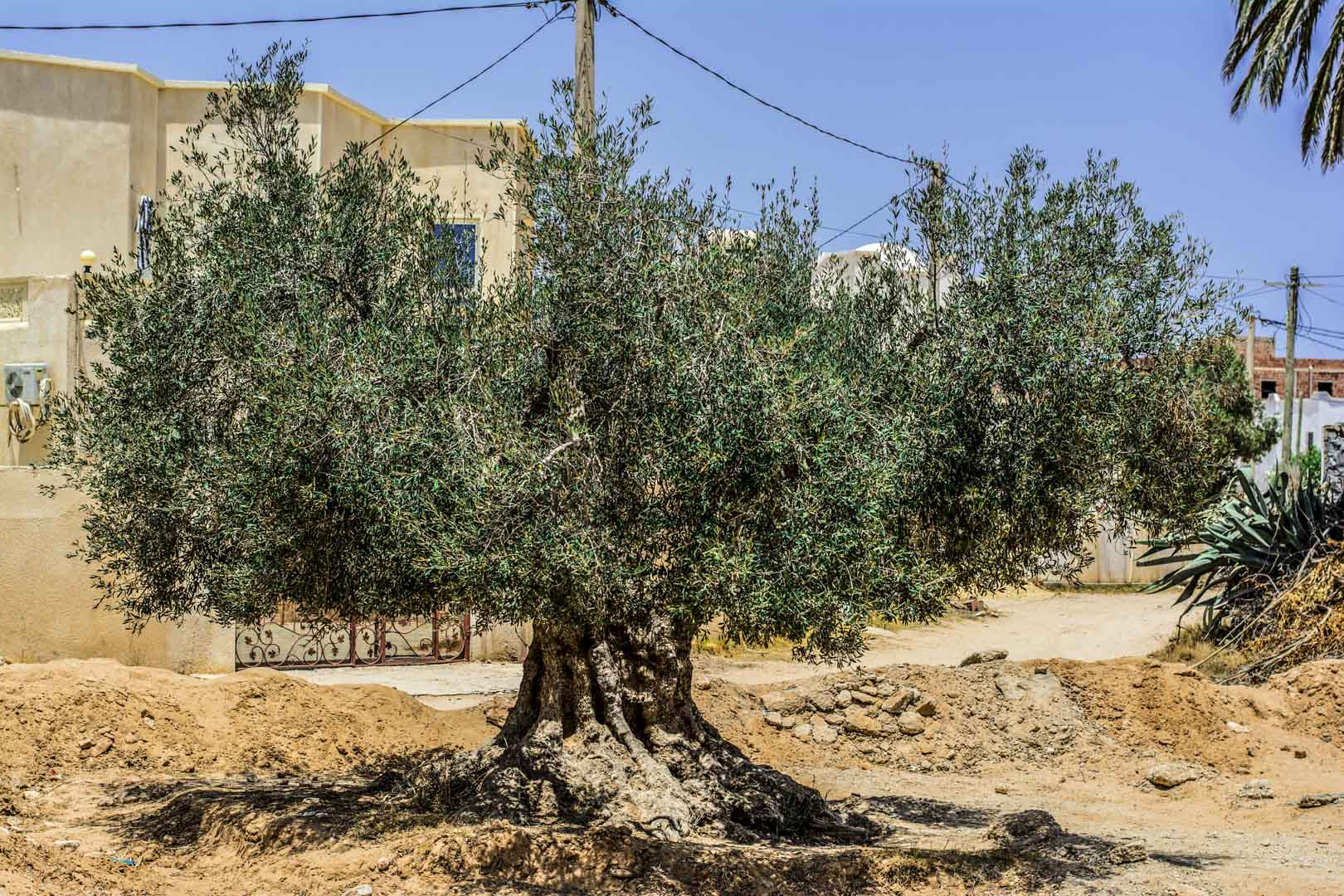 Fotografická expedice Djerba 2017 reportážní fotograf praha Jakub Morávek Djerba photography -137