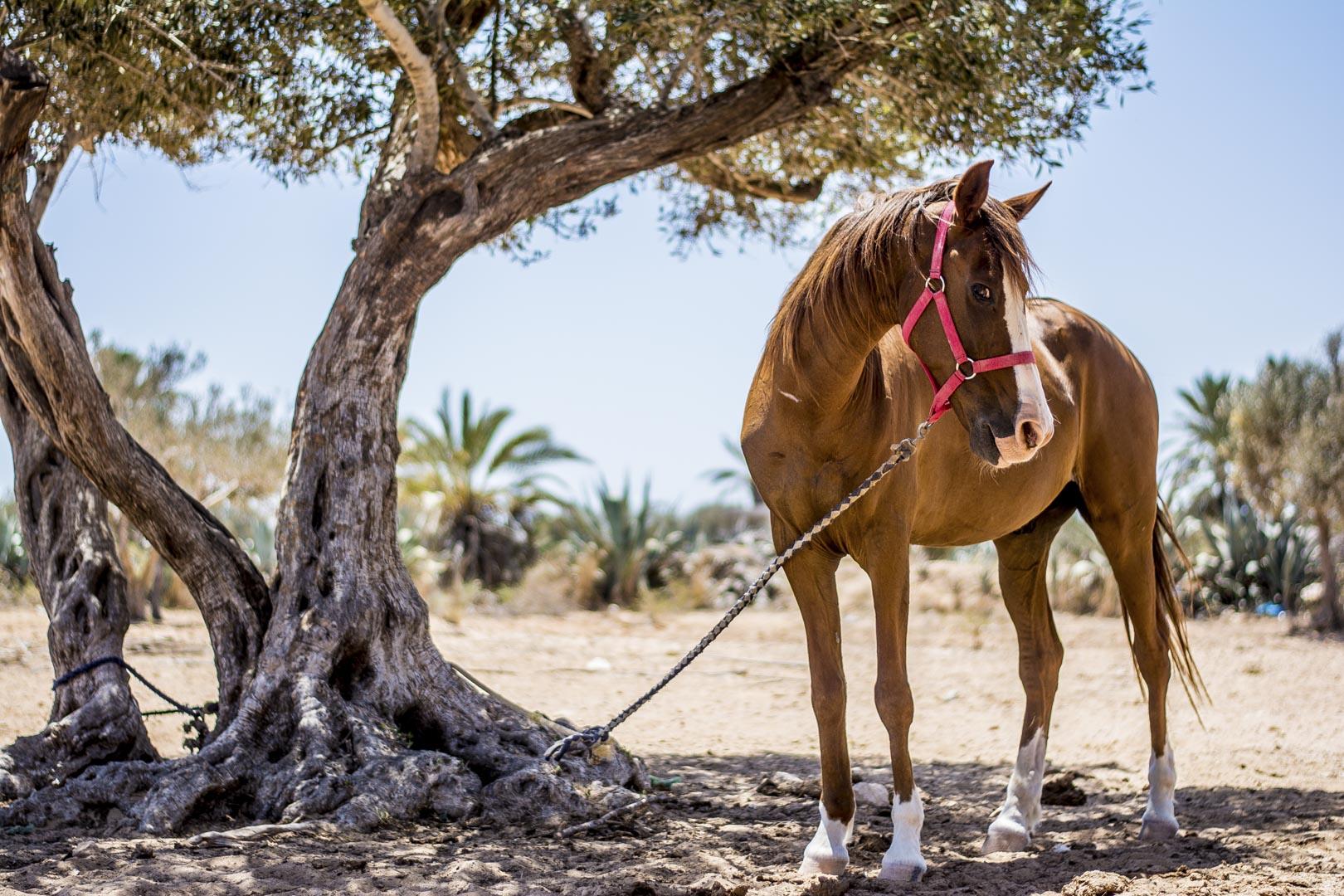 Fotografická expedice Djerba 2017 reportážní fotograf praha Jakub Morávek Djerba photography -66