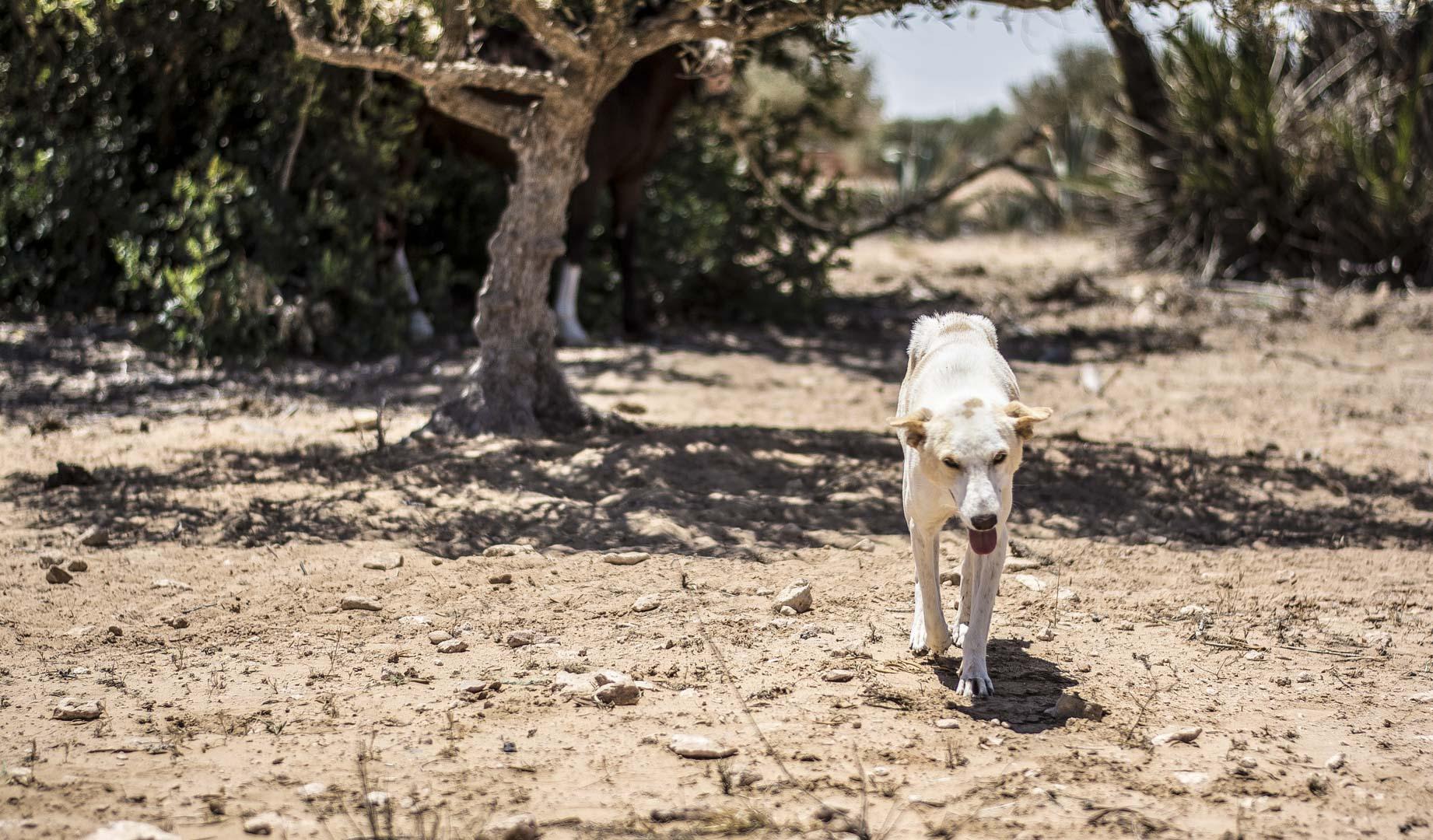 Fotografická expedice Djerba 2017 reportážní fotograf praha Jakub Morávek Djerba photography -82